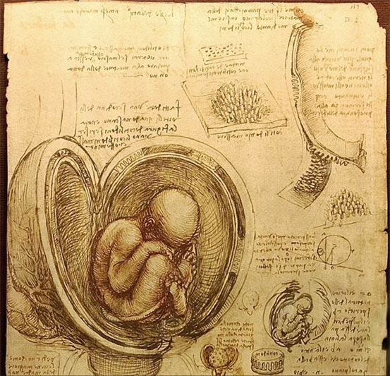 foetus in the womb by Leonardo da Vinci