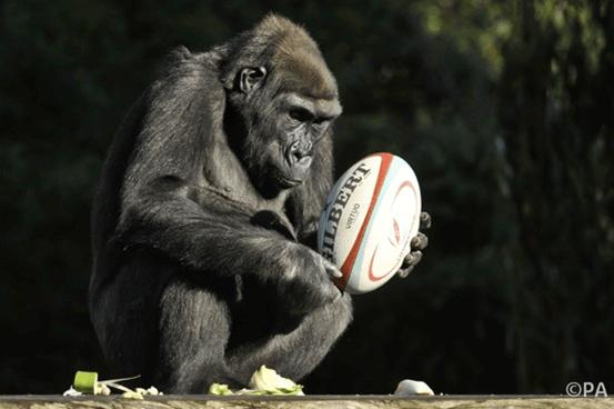 Animals With Human Behavior