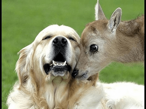 Animals of Different Species Helping Each other