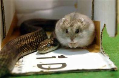 Snake and hamster