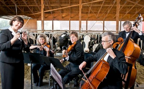 Cows love their music