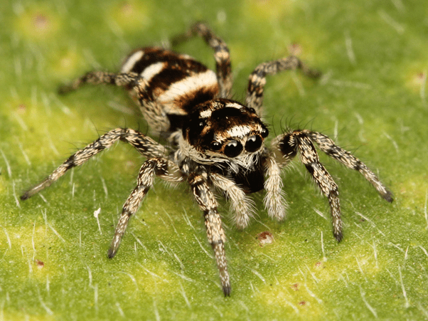 Facts about Spiders