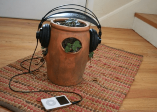 Listening Music on Plants