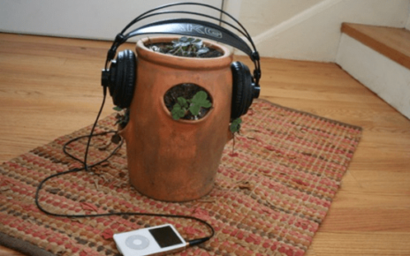Listening Music on Plants