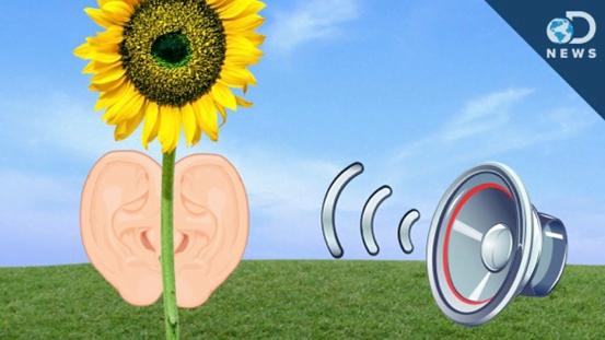 Plants respond to sound waves