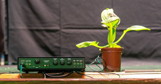 Plants enjoy music thanks to their sensory perception