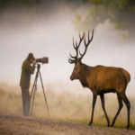 Top 10 Books on Wildlife Photography
