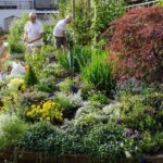 The 10 Reasons Why Home Gardens are Hot